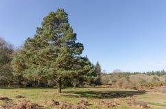 Linwood Bottom. The landscape near Linwood Bottom, New Forest Nationa Park Stock Images