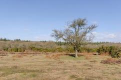 Linwood Bottom. The landscape near Linwood Bottom, New Forest Nationa Park Royalty Free Stock Photo