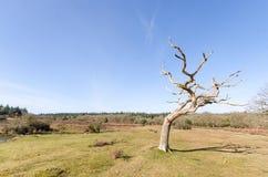 Linwood Bottom. The landscape near Linwood Bottom, New Forest Nationa Park Stock Photo