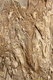 liny камень Стоковые Изображения RF