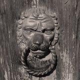 Lion& x27; голова s стоковая фотография