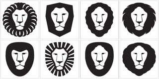 Lion_01 Stock Images
