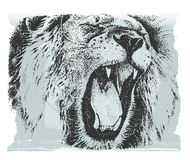 Lion. Animal vector picture - the lion head Royalty Free Stock Photos