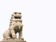 Lion Photo stock