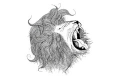 Lion. Black and white Lion head illustration royalty free illustration
