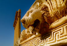 Lion. A had of a Lion in the Ruins of Baalbek Lebanon Royalty Free Stock Images
