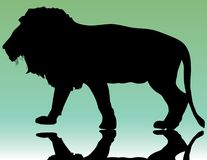Lion. Silhouette of beautiful lion on green background Stock Images