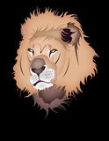 Lion. Illustration of lion's head on a black background vector illustration