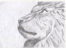 Lion Images libres de droits
