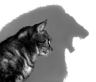 The Lion Within. Black and White Photo of a House Cat casting a shadow of a lion, isolated on a white background. Could symbolize ferocity, courage, or inner royalty free stock images