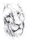 lion royaltyfri illustrationer