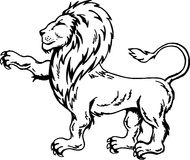 lion Fotografering för Bildbyråer