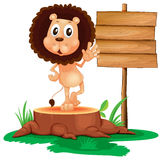 A lion above a trunk beside a wooden signboard Stock Photos