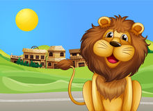 A lion across the village Stock Images