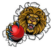 Lion Holding Cricket Ball Breaking Background. A lion angry animal sports mascot holding a cricket ball and breaking through the background with its claws Royalty Free Stock Photography
