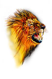 Lion art illustration color Stock Photo