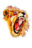 Lion art illustration color Stock Image