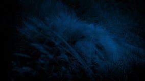 Lion Asleep In Long Grass la nuit clips vidéos