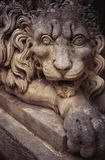 Lion autour Image stock