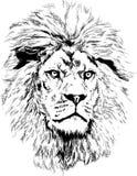 Lion avec la grande crinière Images libres de droits