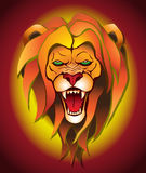 Lion background Royalty Free Stock Photos