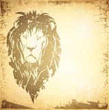 Lion Backround Fotografie Stock