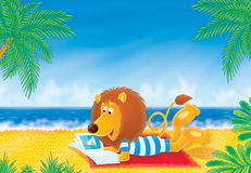 Lion on a beach Royalty Free Stock Photography