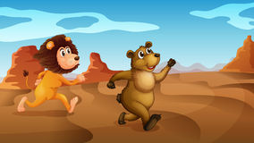 A lion and a bear running Stock Photography