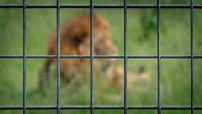 Lion Behind Wire Fence metrajes