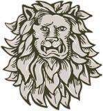 Lion Big Cat Head Etching arrabbiato Immagini Stock Libere da Diritti