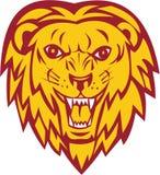 Lion Big Cat Head Roar arrabbiato Immagine Stock