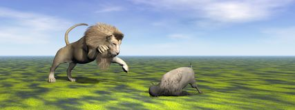 Lion and bison Stock Image