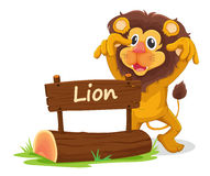 Lion and board Stock Photo