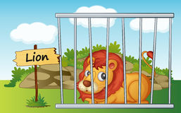 Lion in cage Royalty Free Stock Photography