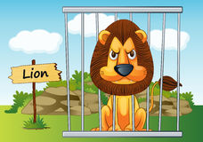 Lion in cage. Illustration of a lion in cage and wooden board Royalty Free Stock Photography