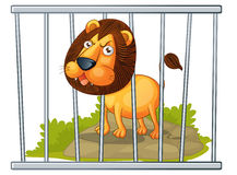 Lion in a cage Stock Photos