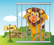 Lion in cage Royalty Free Stock Images