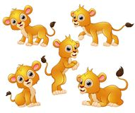 Lion cartoon set collection Stock Images