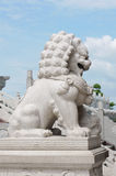 Lion china Royalty Free Stock Photos