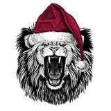 Lion Christmas illustration Wild animal wearing christmas santa claus hat Red winter hat Holiday picture Happy new year. Christmas illustration Wild animal royalty free illustration