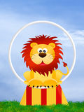 Lion in the circo Stock Image