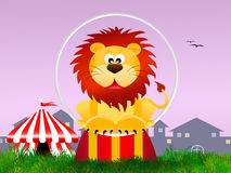 Lion in the circo Royalty Free Stock Images