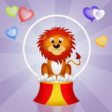 Lion in the circo Stock Photography