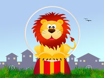 Lion in the circo Royalty Free Stock Photography
