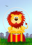 Lion in the circo Stock Images