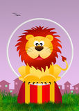 Lion in the circus Royalty Free Stock Image