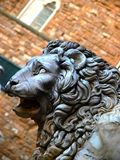 Lion close up Royalty Free Stock Photography