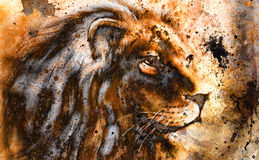 Lion collage on color abstract  background,  rust structure, wildlife animals. Royalty Free Stock Photo