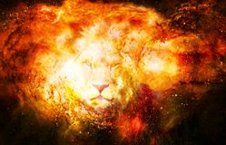 Lion in the cosmic space. Lion photos and graphic effect. Royalty Free Stock Photos