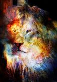 Lion in the cosmic space. Lion photos and graphic effect. Royalty Free Stock Image